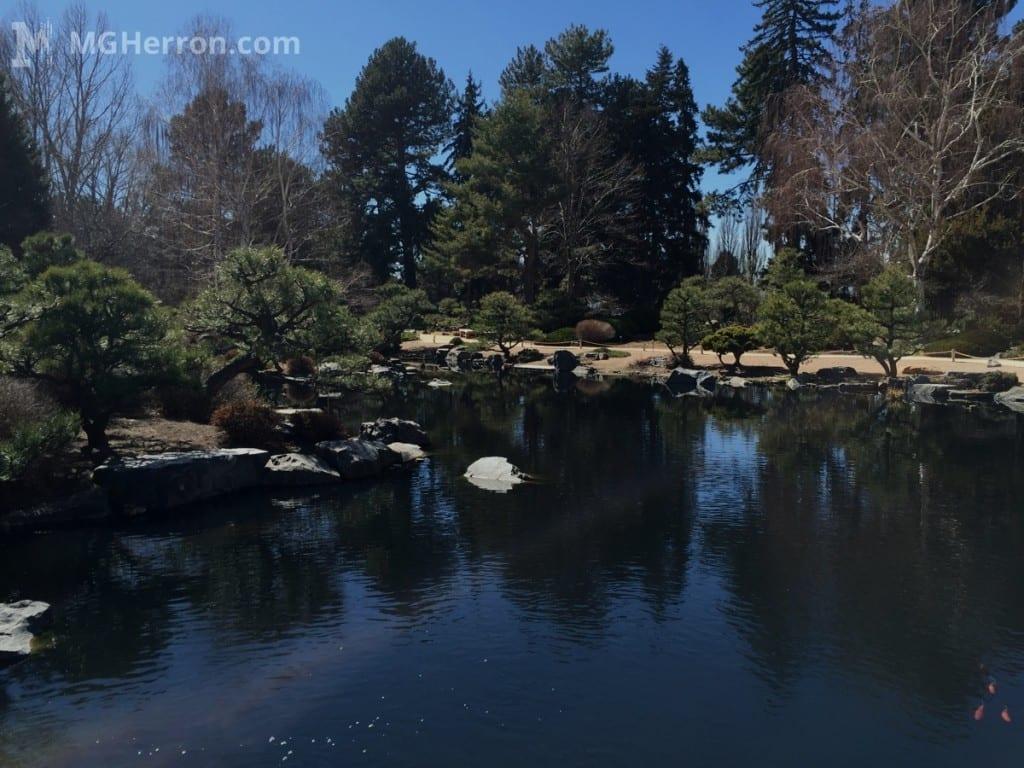 Botanic Garden fish pond